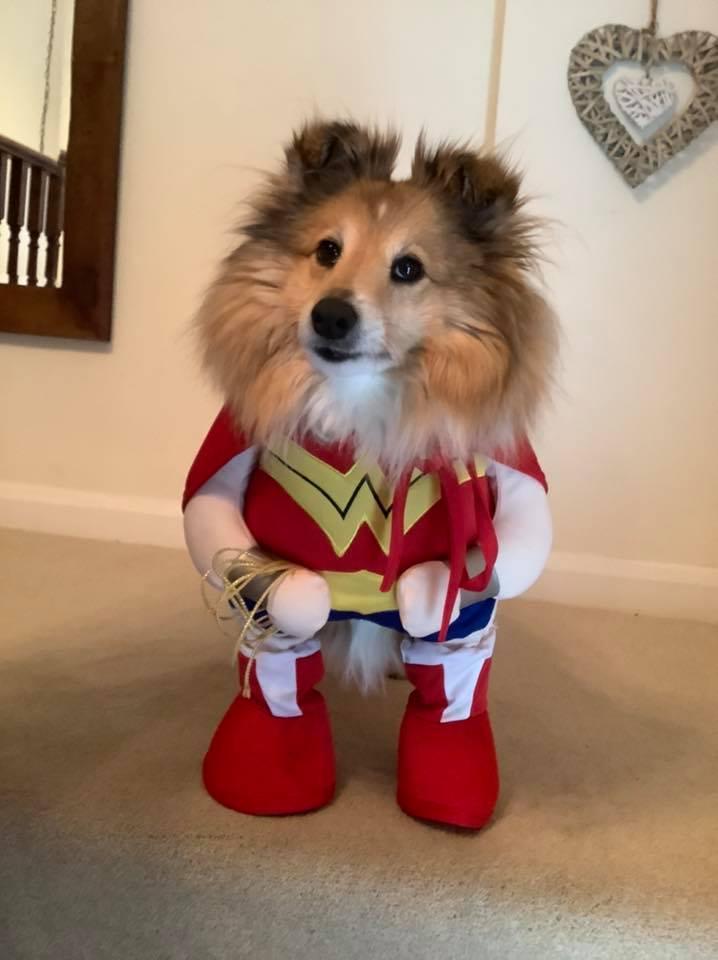 Rachel's super dog Dolly myton Mountain
